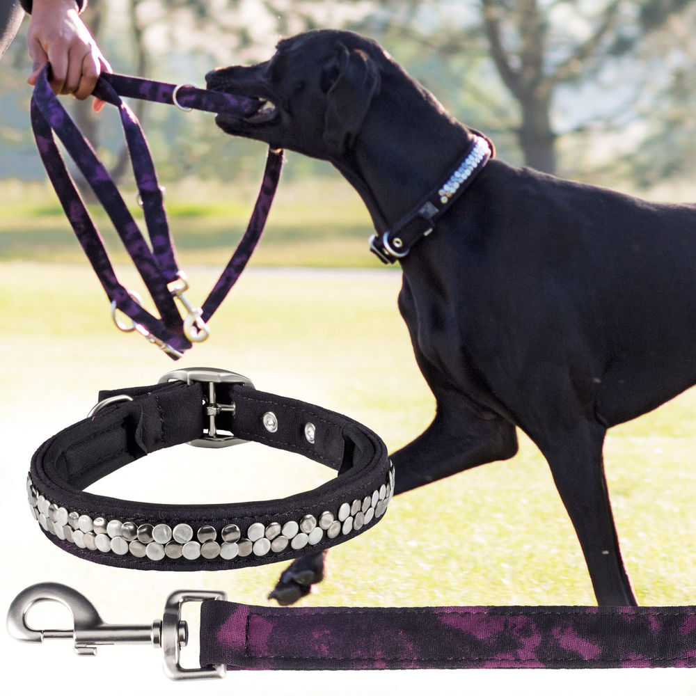 Eskadron Set Halsband Leine Dog Collar Leash S