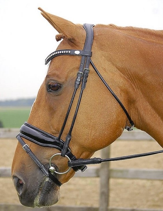 Dy'on DY P.B Dressage Bridle Black Lack Full 1
