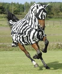 Bucas Buzz-Off Full Neck Zebra mit Halsteil und Bauchlatz 1