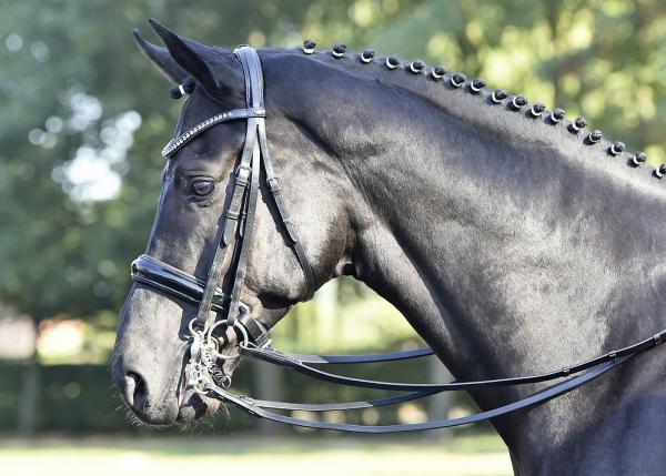 Busse Kandarren Luxury schwarz /strass-grau WB